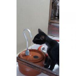 Bebedouro Fonte p/gatos VIP 1,5 lts c/patinhas filtro CenterArts - 2648 vendas - Base grande