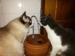 Bebedouro Fonte p/gatos VIP 2,5 lts cerâmica c/patinhas, filtro, largo, + 2 BRINDES - CenterArts - Base grande