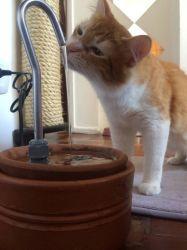 Bebedouro Fonte p/gatos Luxo II 3,5 litros cerâmica + 2 BRINDES, CenterArts - Base grande